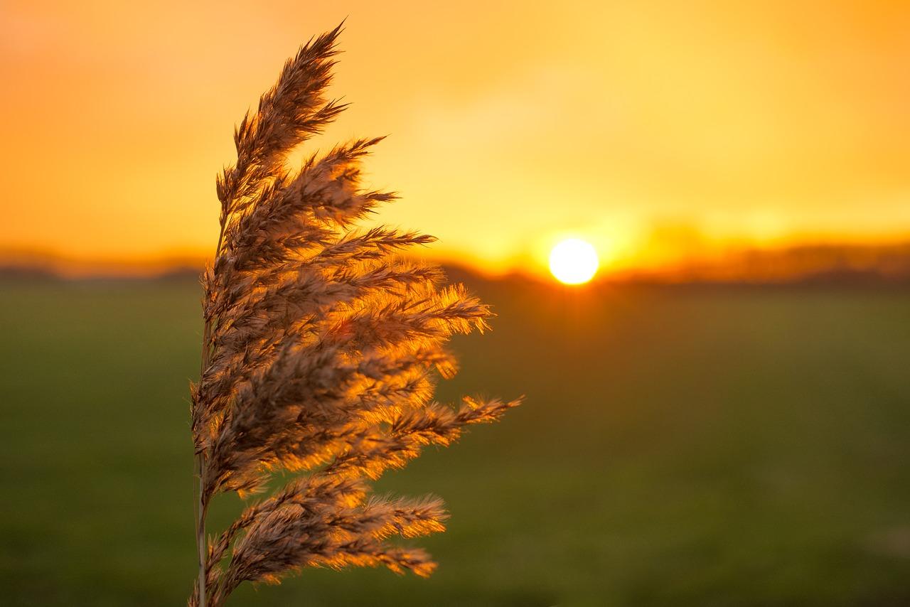plume, sunset, yellow
